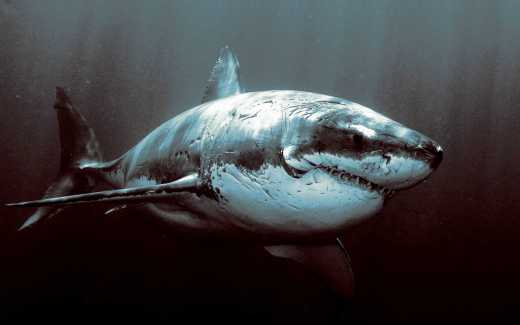 """""""chicks dig scars"""" well...probably not those ones....unless they are saucy lady sharks...then maybe...."""